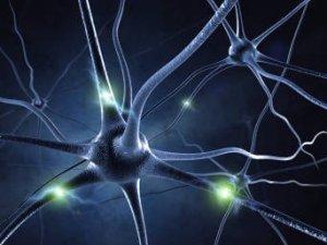 SLA neurones Web